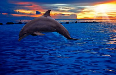 the-Oath-February-2021-Travel-Curacao